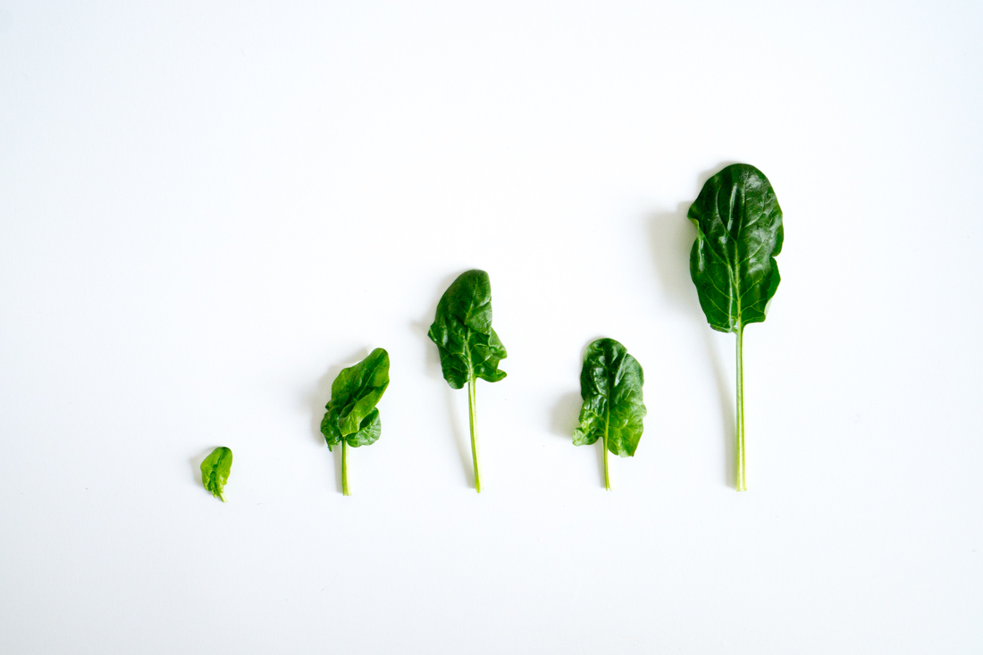 Bunched spinach, unbunched.